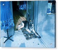 Acrylic Print featuring the photograph Asheville Dog by Victoria Lakes
