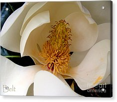 Southern Magnolia Acrylic Print by Christine Belt