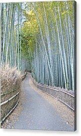 Asia Japan Kyoto Arashiyama Sagano Acrylic Print by Rob Tilley