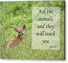 Acrylic Print featuring the photograph Ask The Animals by Jeannette Hunt