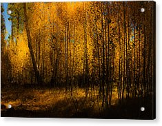 Acrylic Print featuring the photograph Aspen Glow by Randy Wood