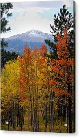Aspen Grove And Pikes Peak Acrylic Print by Kimberlee Fiedler