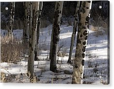 Acrylic Print featuring the photograph Aspen Grove by Angelique Olin