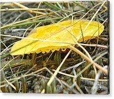 Aspen Leaf After The Rain Acrylic Print by Sara  Mayer