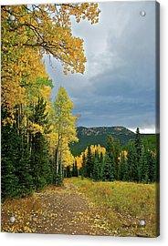 Aspen Pathway Acrylic Print