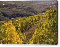 Aspen Valley Acrylic Print by Timothy Johnson