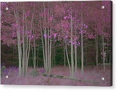 Aspens Acrylic Print by C Thomas Willard