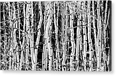 Acrylic Print featuring the photograph Aspens by Clare VanderVeen