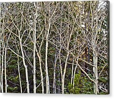 Aspens Color Gone Acrylic Print by Larry Darnell