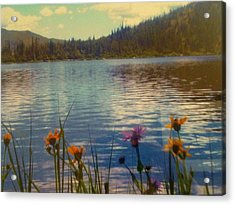 Acrylic Print featuring the photograph Aspen's Gift by Shawn Hughes