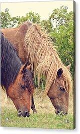 Assateague Ponies Acrylic Print