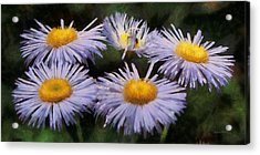 Asters Painterly Acrylic Print by Ernie Echols