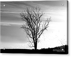 At End Of Day I  Acrylic Print by Rhonda Strickland