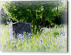 At Rest Acrylic Print by Marilyn Wilson