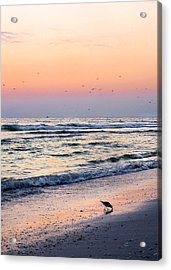At Sunset Acrylic Print