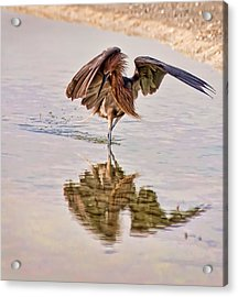 Attack Dance Acrylic Print by Steven Sparks