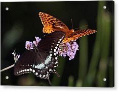August Butterflies Acrylic Print by Kathryn Mayhue
