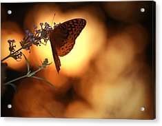 August Evening Acrylic Print by Kathryn Mayhue