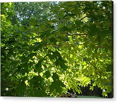 August Leaf Canopy Acrylic Print by Suzanne Fenster