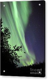 Aurora Borealis Above The Trees Acrylic Print by Jiri Hermann