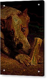 Australian Cattle Dog Acrylic Print by One Rude Dawg Orcutt