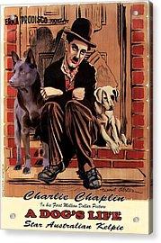 Australian Kelpie - A Dogs Life Movie Poster Acrylic Print
