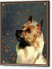 Australian Terrier Acrylic Print by One Rude Dawg Orcutt