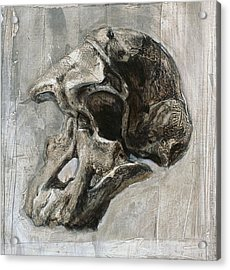 Australopithecus Africanus Skull Acrylic Print by Kennis And Kennismsf