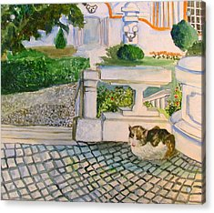 Austrian Cat Acrylic Print by Mindy Newman