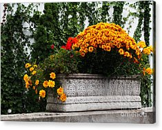 Autum Flowers With Red Accents And Ivy Acrylic Print by Anne Boyes