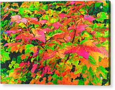 Autum Maple Leaves 3  Acrylic Print by Lyle Crump
