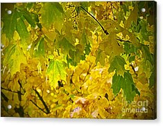 Autumn - Mellow Time Acrylic Print by Gwyn Newcombe