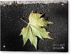 Autumn 10 Acrylic Print by Elena Mussi