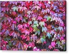 Autumn 12 Acrylic Print by Elena Mussi