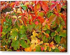 Autumn 4 Acrylic Print by Elena Mussi