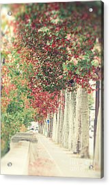 Autumn And Fall Acrylic Print