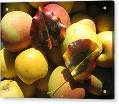 Autumn Apple Afternoon Acrylic Print