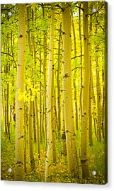Autumn Aspens Vertical Image  Acrylic Print by James BO  Insogna