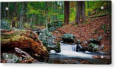 Autumn At The River Acrylic Print by David Hahn
