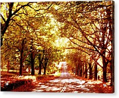 Autumn Avenue Acrylic Print by Linde Townsend