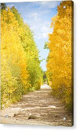 Autumn Back County Road Acrylic Print by James BO  Insogna