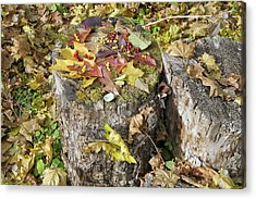 Autumn Berries And Leaves  Acrylic Print by Aleksandr Volkov