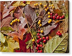 Autumn Berries And Leaves Background  Acrylic Print by Aleksandr Volkov