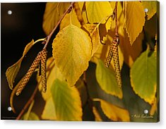 Autumn Birch In Southern Oregon Acrylic Print by Mick Anderson