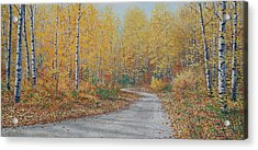 Autumn Birches Acrylic Print by Jake Vandenbrink