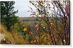 Autumn By The River Acrylic Print by Jim Sauchyn