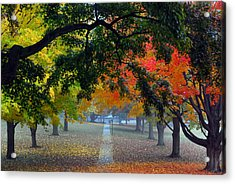 Autumn Canopy Acrylic Print by Lisa Phillips