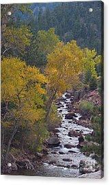 Autumn Canyon Colorado Scenic View Acrylic Print by James BO  Insogna