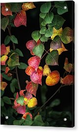 Autumn Color Acrylic Print by Brenda Bryant