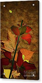 Autumn Color Acrylic Print by Bruno Santoro